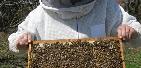 Lake Cumberland Beekeepers